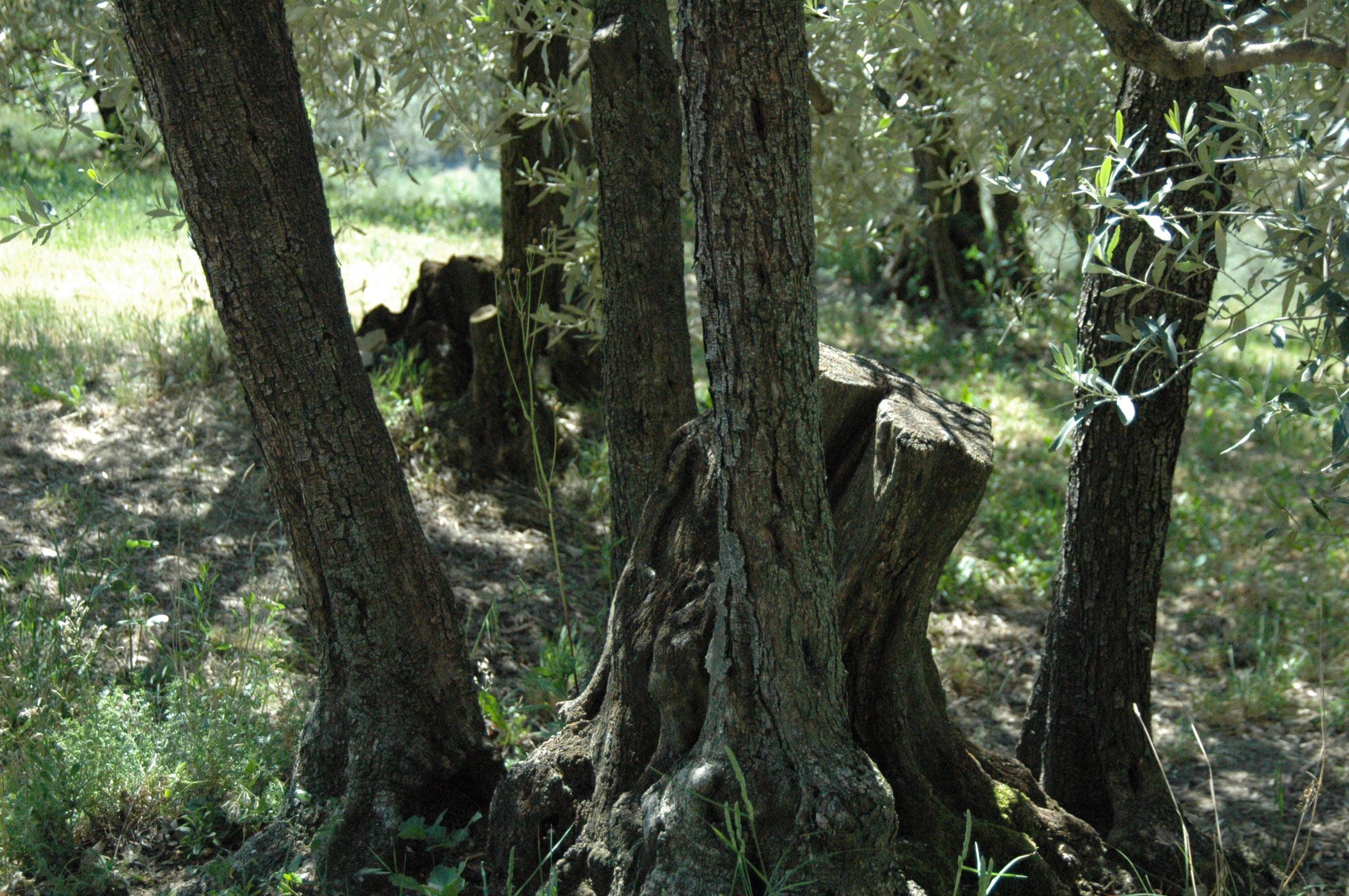 slide-arbre