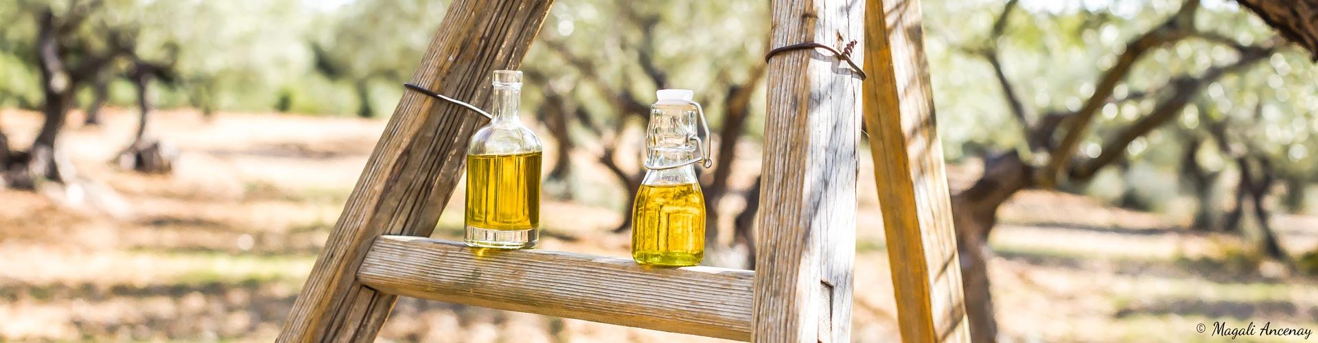 echelle-cueillette-recolte-huile-olive-france-origine-label-qualite-aop
